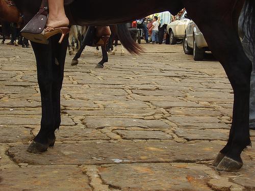 caballo cuadrupedo